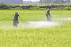 Pesticides Linked to Parkinson's