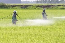 Pesticides Linked to Parkinson's
